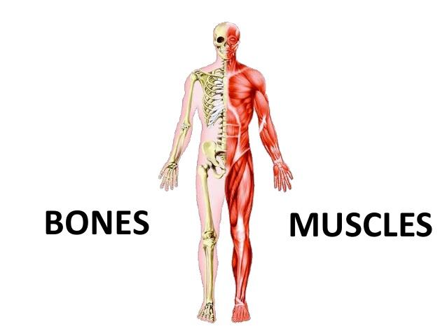 остеосаркопения
