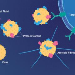 virus and alzgaimer